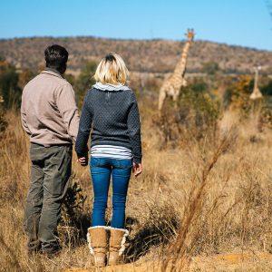 bush walk giraffe