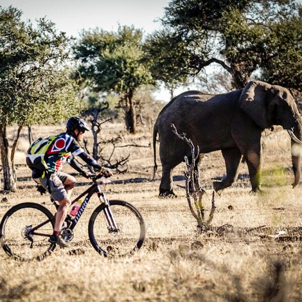tour-de-tuli-2019-elephant-close-up--tour